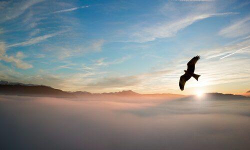 Eagle at sunrise for website